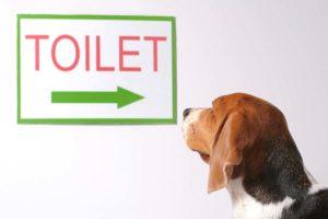 pet accident services