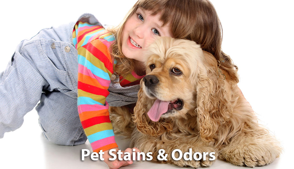 pet stain and odor removal services amarillo tx