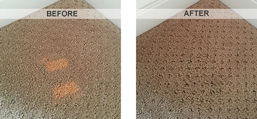 carpet bleach spot repair